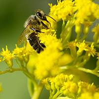 Алергиите - какво трябва да знаем за тях