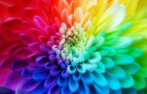 Какво въздействие ни оказват цветовете