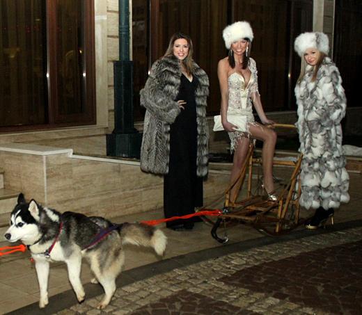 Петя Велкова дойде с впряг от хъскита на руската вечер вчера