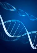 Алергиите могат да бъдат причинени от генни мутации на протеин