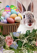 Великден и символиката на заека