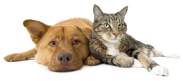 За кучетата и котките от еволюционна гледна точка