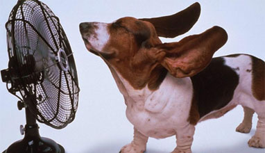 Лесни начини да се разхладите в летните жеги