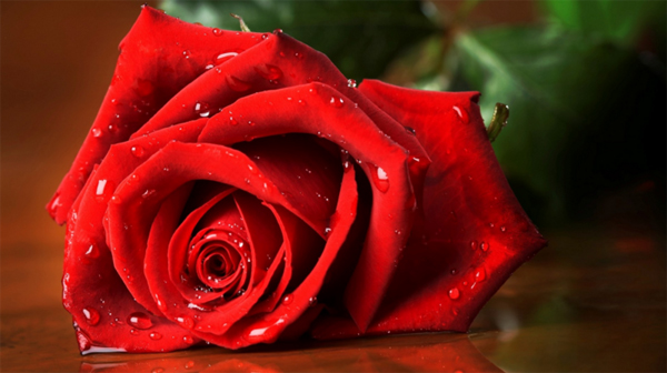 Свети Валентин 2016: Перфектните подаръци