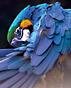 """Финалистът от реалити формата """"Турция търси талант"""" Калоян Явашев гостува в Делта Планет Мол Варна"""