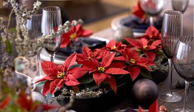 Коледна звезда - идеи за естествена украса и декорация