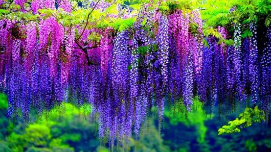 Дрехи в лилаво