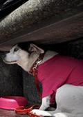 Китайска дизайнерка създава дрехи за кучета