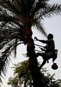 Палмовото масло пагубно за здравето и околната среда